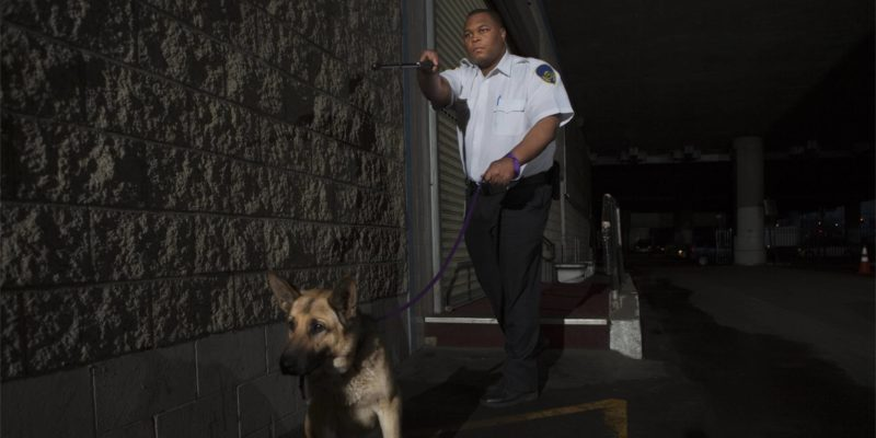police officer uses excessive force by siccing the dog on suspect