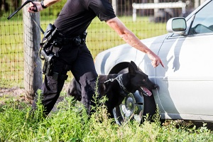 police K9 unit black shepherd finding drugs narcotics