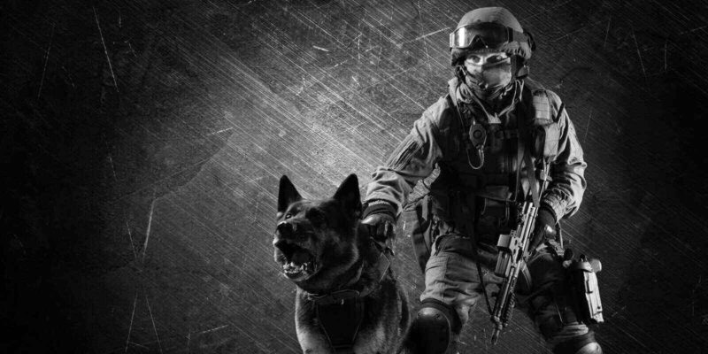 man in uniform with a weapon in his hands sets the sheepdog on a criminal