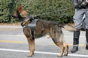 police dog looking at people