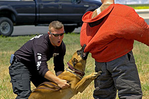 training to prevent police dog injury