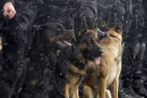 various police dogs with cops